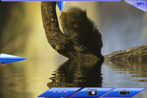 Waterize Video Live iPhone App Review