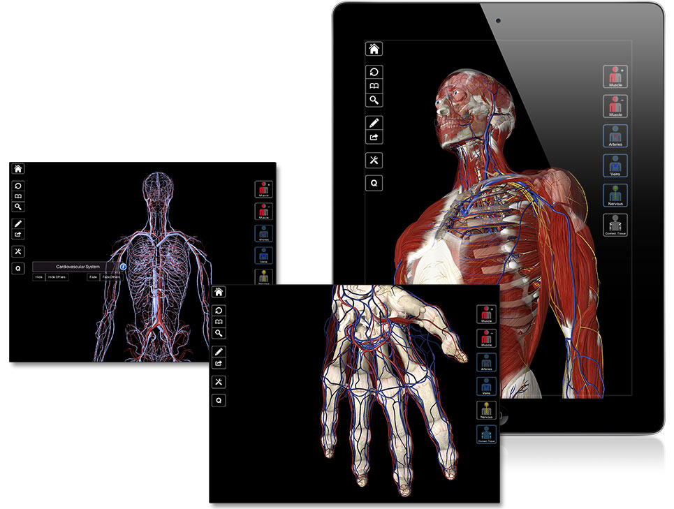 Essential Anatomy 2 Gallery - human body anatomy