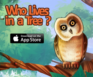 Who Lives In A Tree?